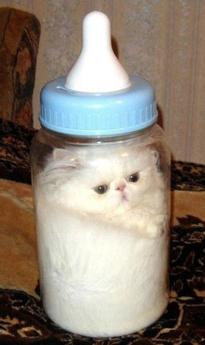 ... ! The cat is also milk colored so it looks like a bottle of milk