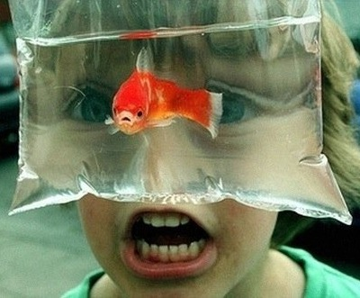 Kids goldfish glasses get all your fish food and pet for Fish food walmart