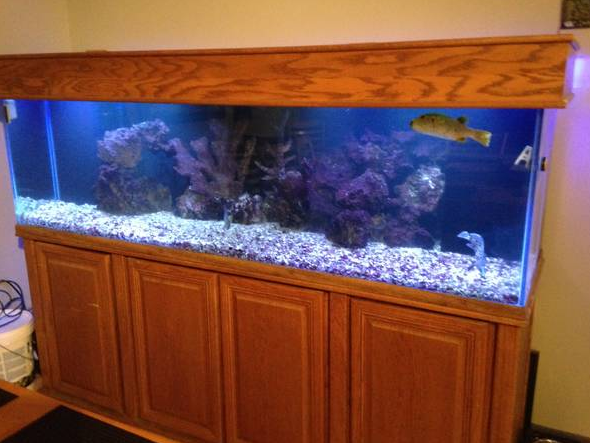 200 gallon reef ready oceanic fish tank classified ad for 200 gallon fish tank