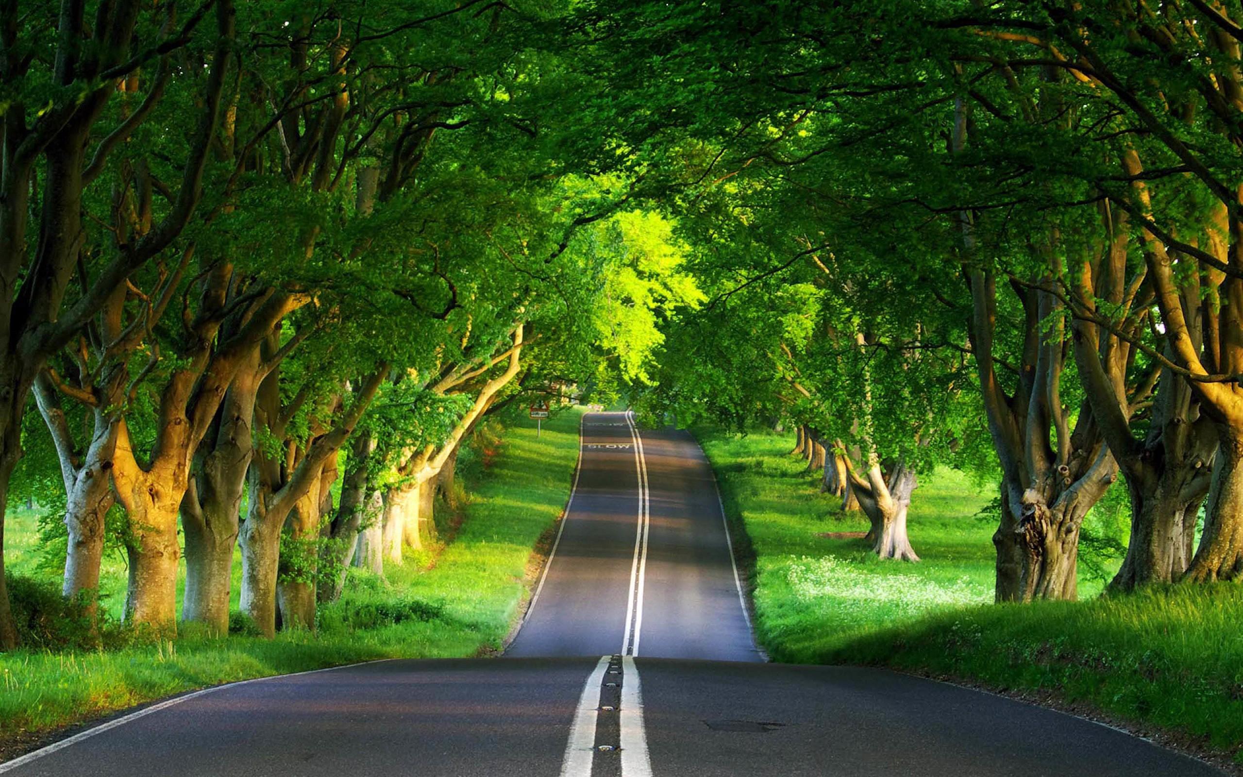 Amazing Road In A Forest Wallpaper Faxo Faxo