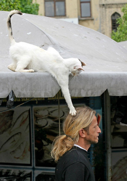 Sneaky Cat Reaches For Man's Head