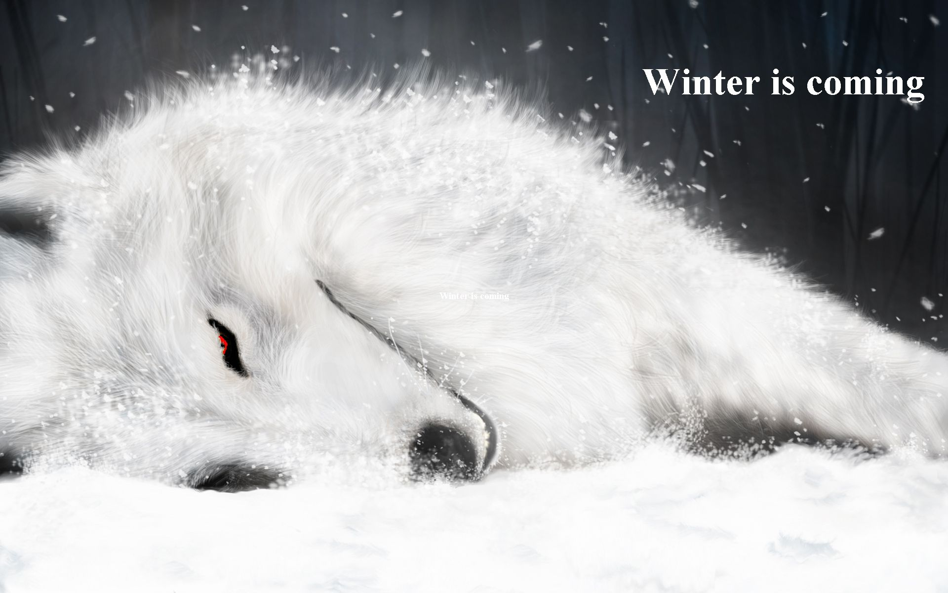 Beautiful White Wolf With Red Eyes Wallpaper Faxo Faxo