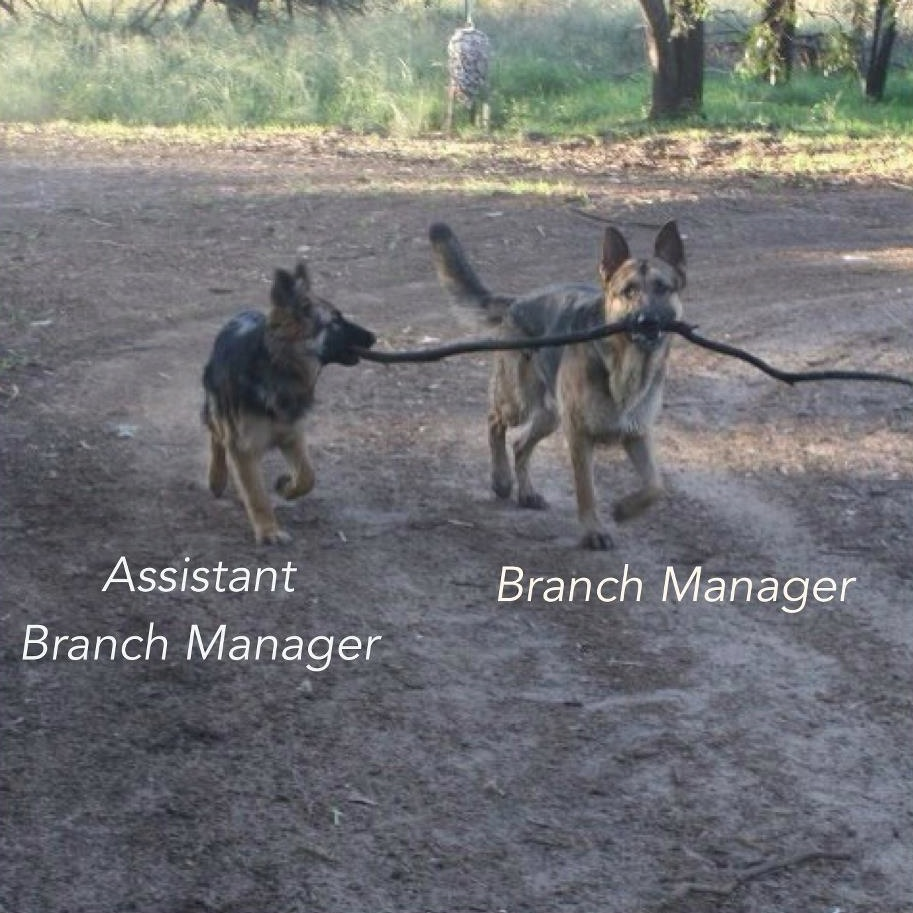Dogs Get A Promotion Branch Manager And Assistant Branch