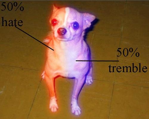 Skull Diagram Of A Dog