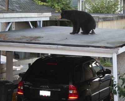 Good Thing I Have A Car Port... BEAR POOP ON A ROOF